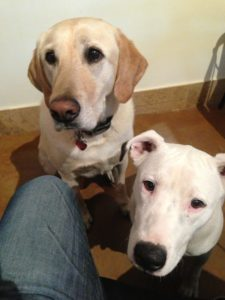 barley_hops_pergola_dogs